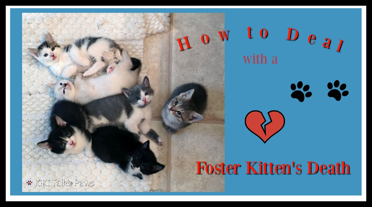 How To Deal With A Foster Kitten S Death Kiki Talks Paws